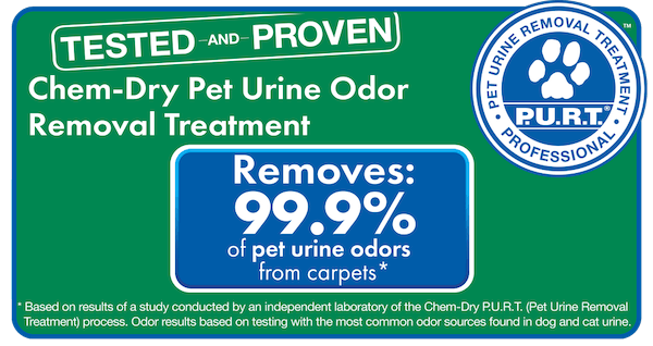 pet stain removal in carpet